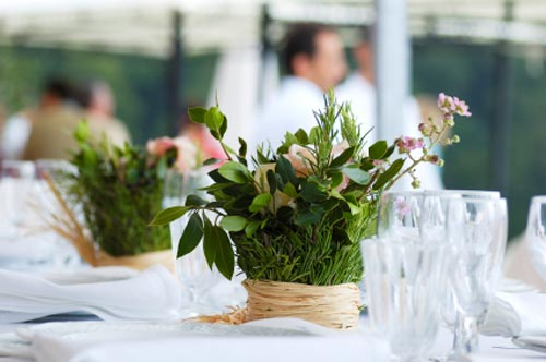 centerpiece plants table