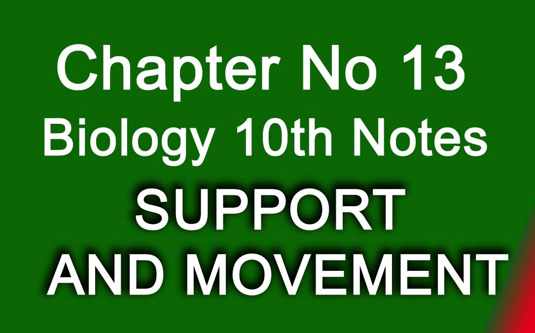 Chapter No 13 SUPPORT AND MOVEMENT