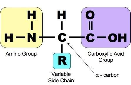 Draw the general formula of amino acid. Identify the different parts of the functional groups present in it