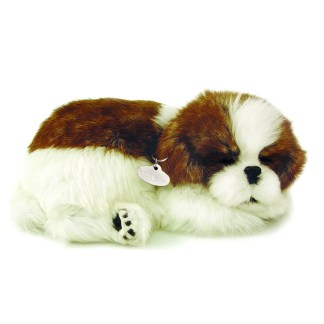 Shih Tzu Bundle