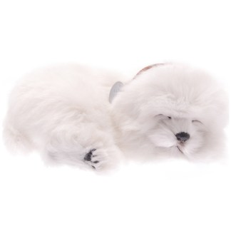 maltese bundle