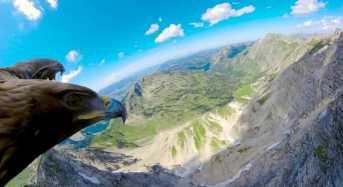 Κάμερα πάνω σε αετό, μας πετάει μαζί του πάνω από τις Άλπεις