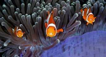 Η μαγεία του θαλάσσιου κόσμου σε υποβρύχιες λήψεις