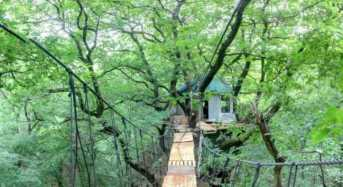 Μένουν σε δεντρόσπιτα για να σώσουν το δάσος