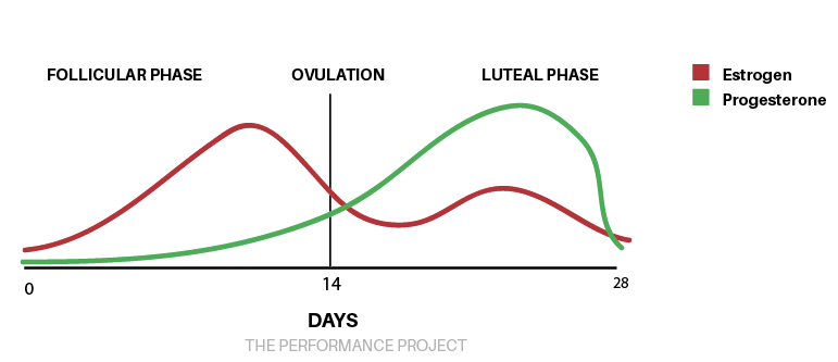 Menstrual-cycle-overview-chart