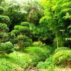 Jardin Les Bambous de Planbuisson