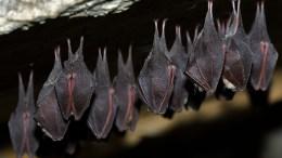 20 especies de murciélagos en peligro de extinción