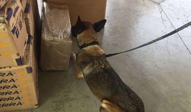 Detectan aparente droga sintética en de botes para café en Aeropuerto de Querétaro