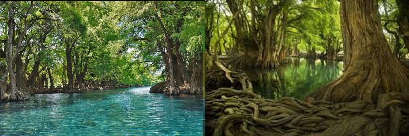 Lago de Camécuaro «Lugar de baño»