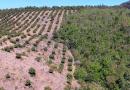 La amenaza ambiental para Michoacán en un papel