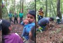 Un millón de plantas para reforestar mil hectáreas en Zitácuaro