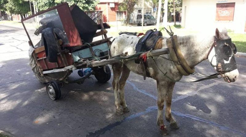 carrero por maltrato animal