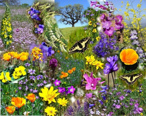 314720-spring-flowers
