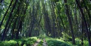 Δάσος Κοτζά Ορμάν: Η τελευταία ζούγκλα της Ευρώπης είναι στην Ελλάδα!