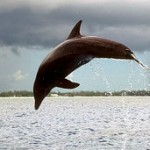 130723101442_dolphin_delfin_bbc_304x171_bbc_nocredit