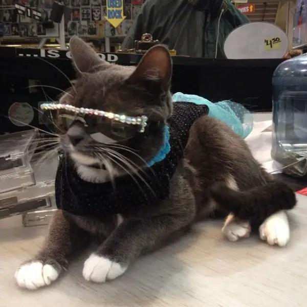 Bagel-sunglasses-cat2-600x600