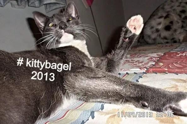 Bagel-sunglasses-cat4