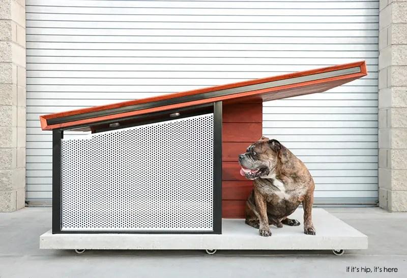doghausoutdoor1
