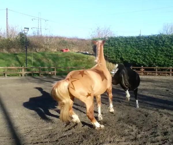 JMC-Equestrian-clipping7-600x505