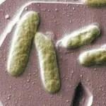 bacterias_pilas
