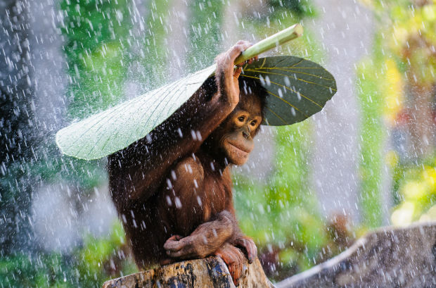 Andrew_Suryono,_Indonesia,_Entry,_Nature_and_Wildlife_Category,_Open_Competition,_2015_Sony_World_Photography_Awards-w620