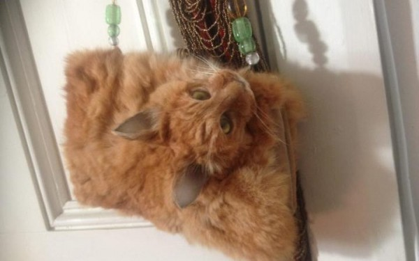 dead-cat-handbag-600x375