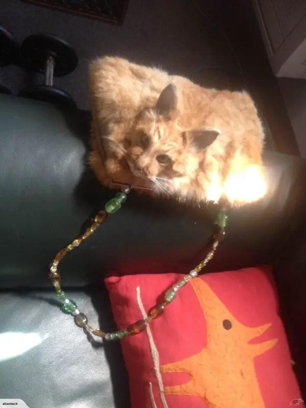 dead-cat-handbag2-600x800