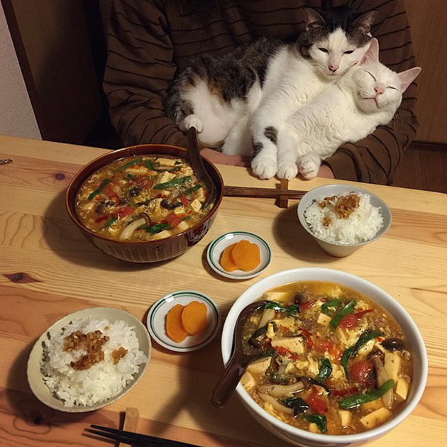 gatos-observando-humanos-cenar-naomiuno-15