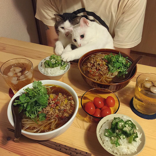 gatos-observando-humanos-cenar-naomiuno-3