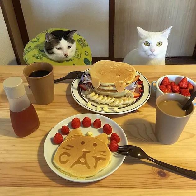 gatos-observando-humanos-cenar-naomiuno-8