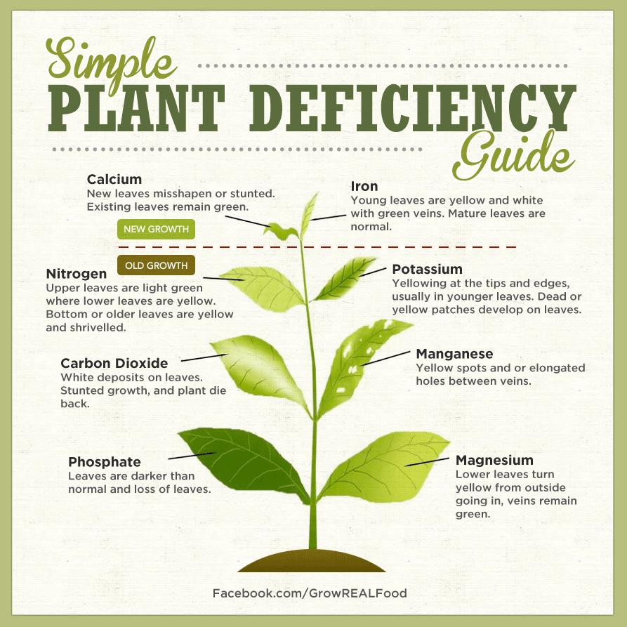 Identifying Plant Nutrient Deficiencies - Permablitz Melbourne