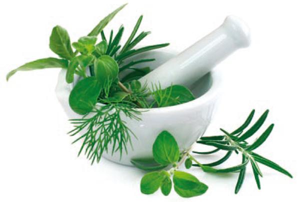 plante médicinal et plante utile