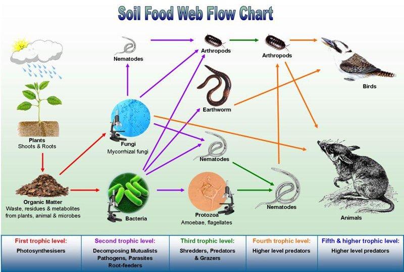 La permacultura del suolo - parte 2. La rete alimentare del suolo