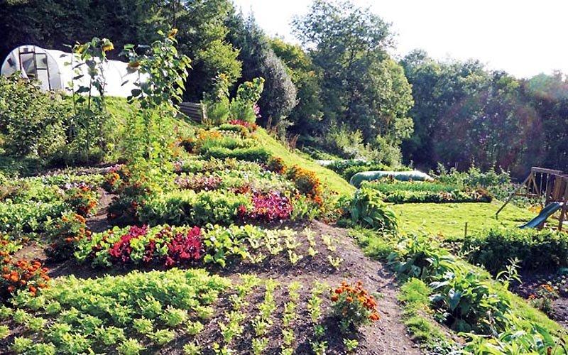 Quattro tecniche di permacultura per coltivare con meno fatica e più raccolto