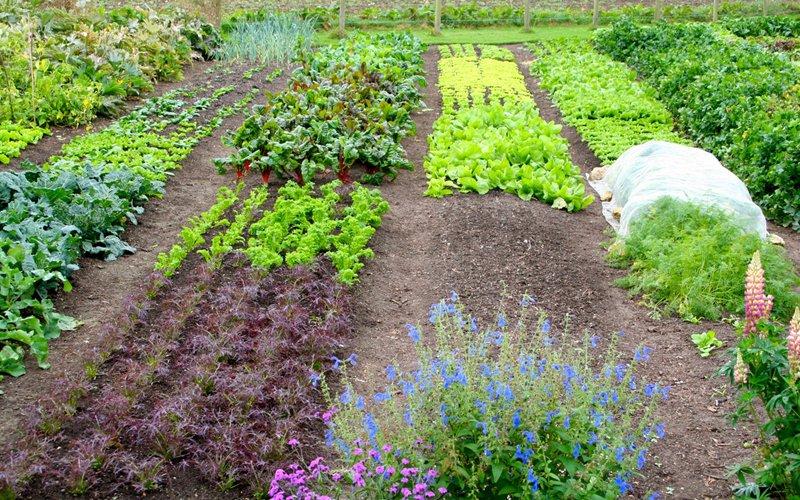 La permacultura del suolo, parte terza: cura del suolo