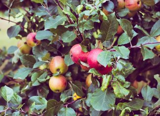 alberi frutta permacultura
