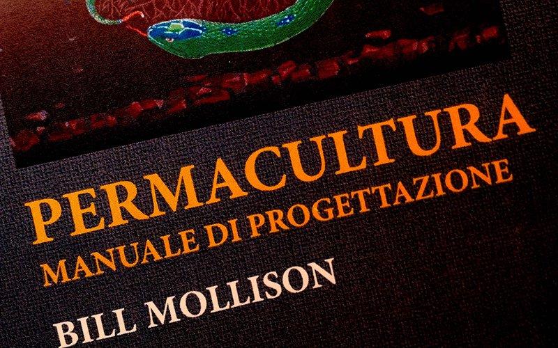Cosa accomuna Michelangelo a Bill Mollison?