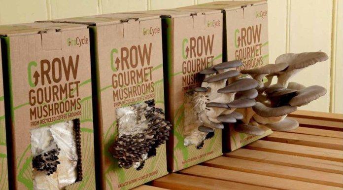 permacultura aziende