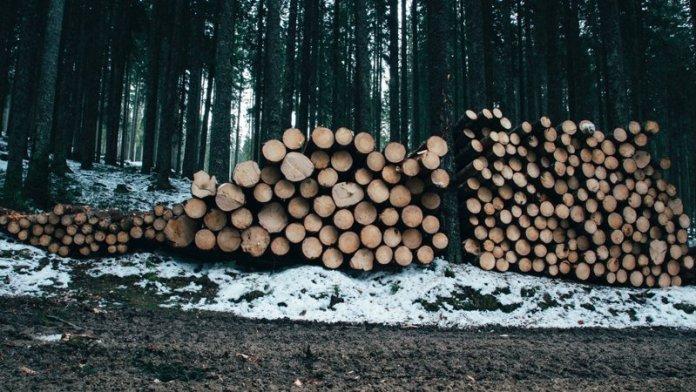alberi foresta matura permacultura