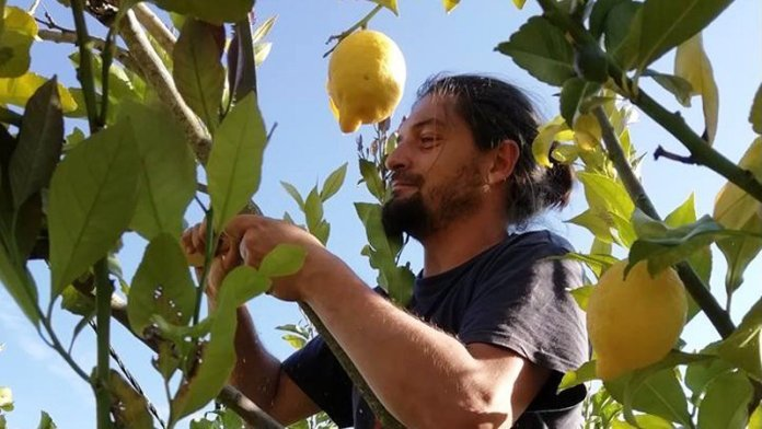Giuseppe Sannicandro permacultura food forest