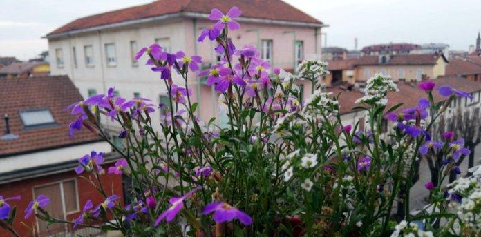 primavera microorto balcone