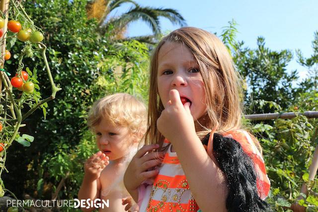 Enfants mangeant des tomates dans jardin permaculture