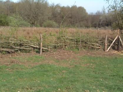 Hedge laying