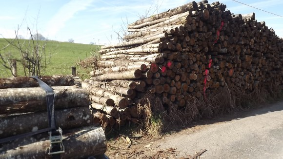 Hout (15)