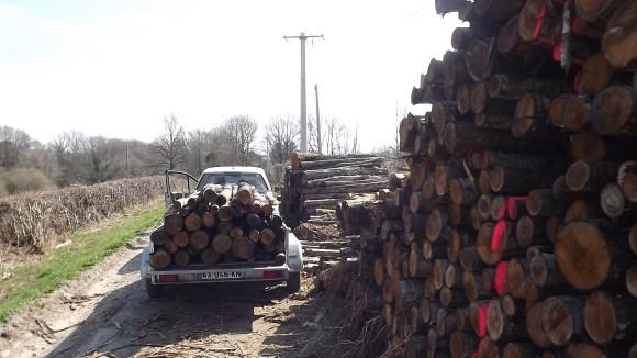 Timber (17)