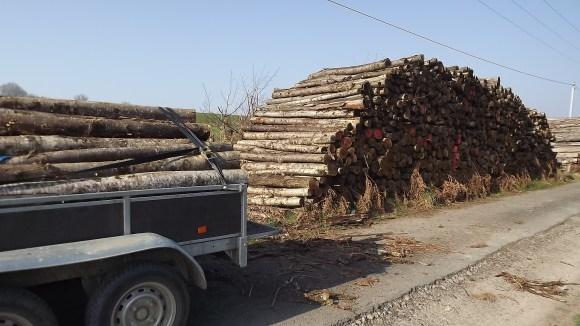 Timber (8)