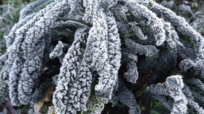 Frost on Nero di Toscana