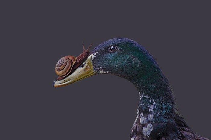 Ente und Schnecke