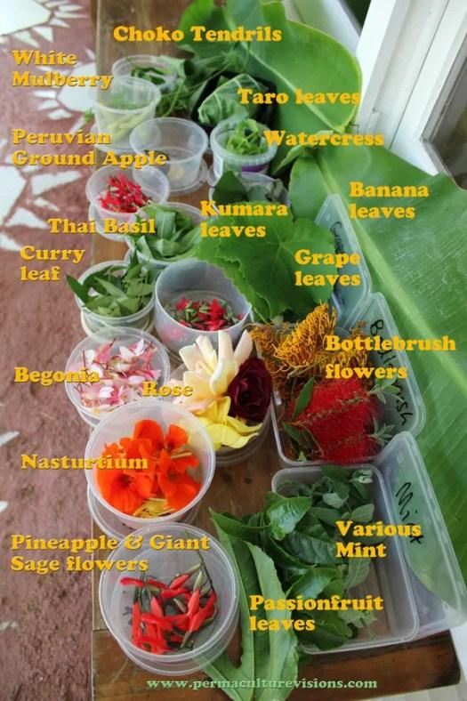 unusual-foods
