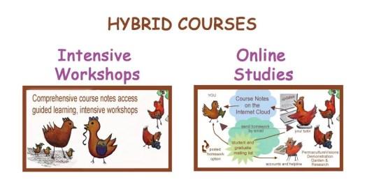 hybrid studies